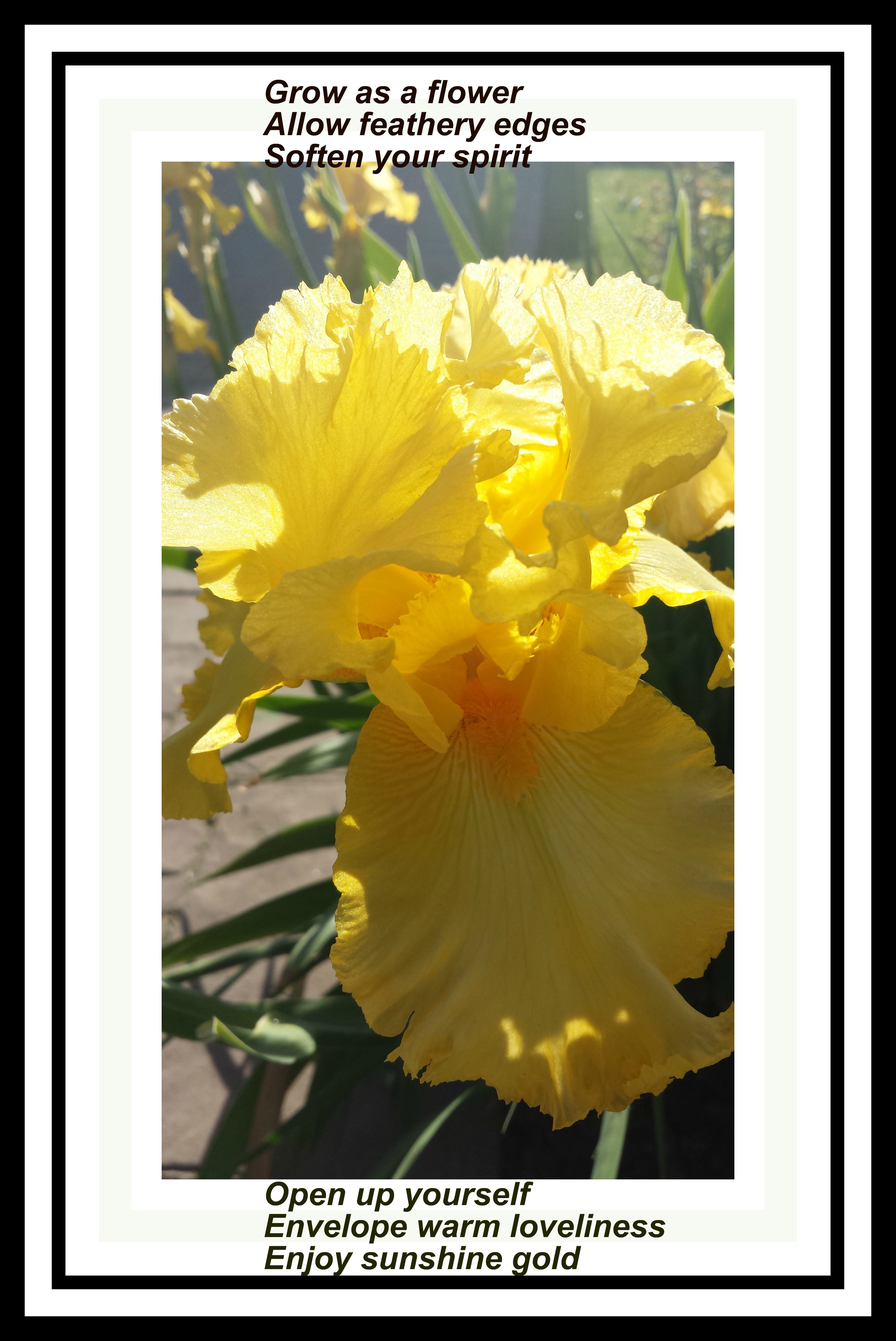 Iris Poem Final Writing Wings For You
